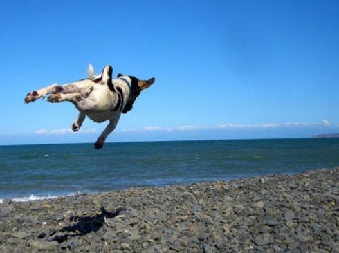 Πετάει  ο σκύλος;