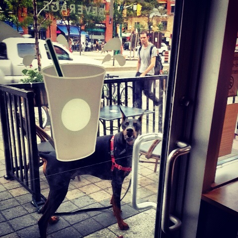 Logan waiting for me outside a Toronto Starbucks.