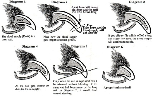 Dog nail trimming instructions