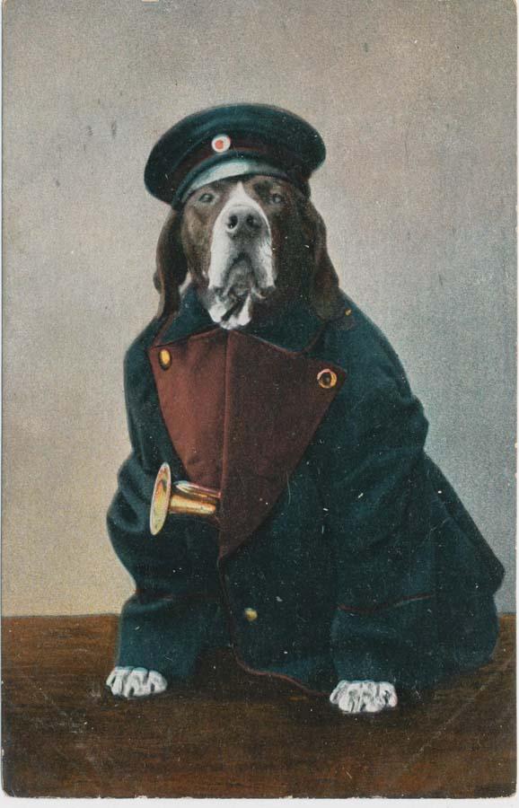 Dog on postcard, 1910
