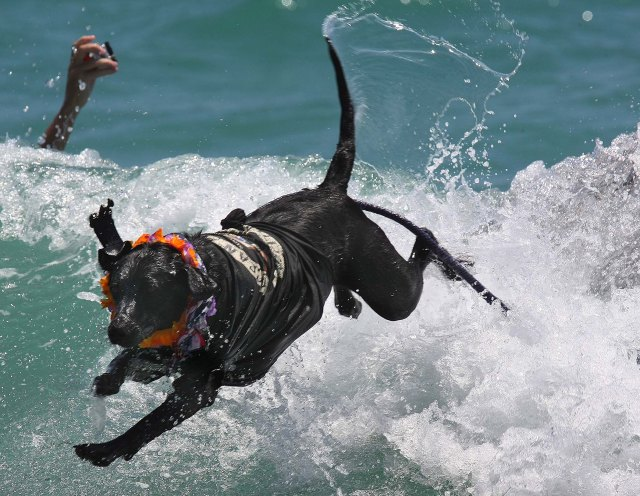 Onyx jumps off a surfboard at the end of his ride.