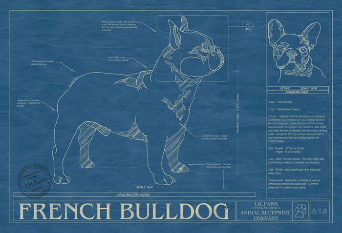 Dog blueprints 5 55 5555 malvernweather Gallery