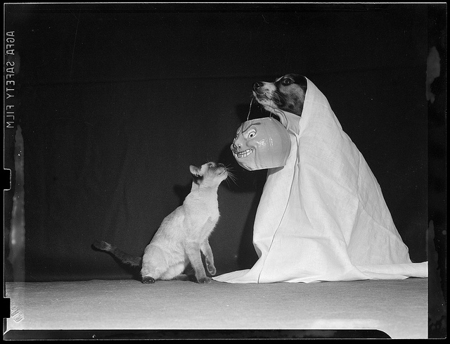 1940: Dog and cat enjoy Halloween