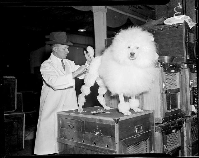 1934 - 1956: Dog coiffure