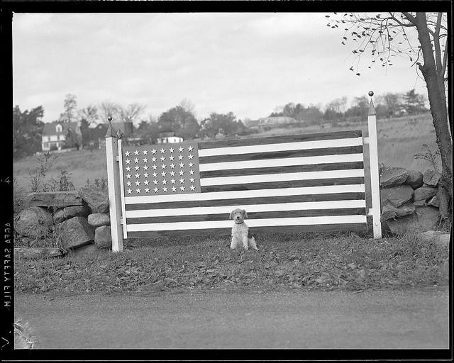 1934 - 1956: Dog & flag