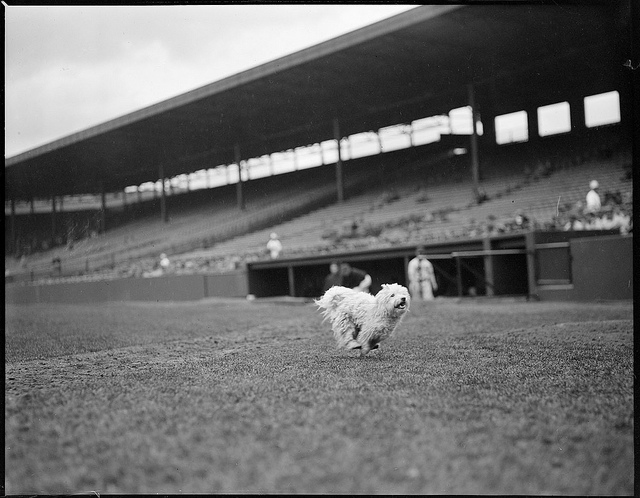 1917 - 1934: Dog at the ball park