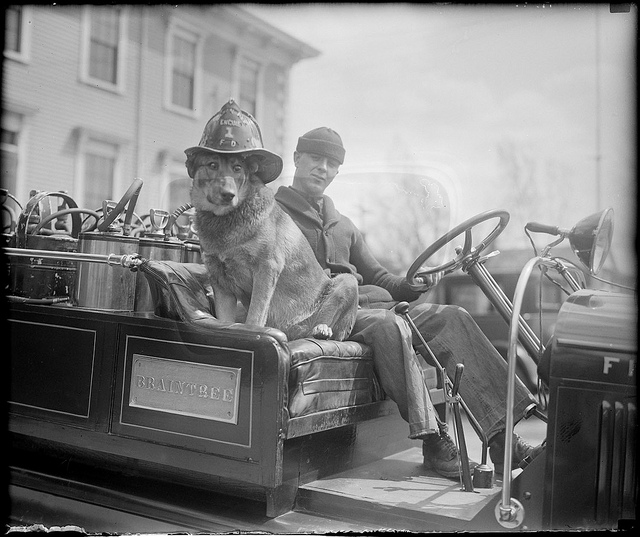 1935: Dog responds to every alarm, Braintree