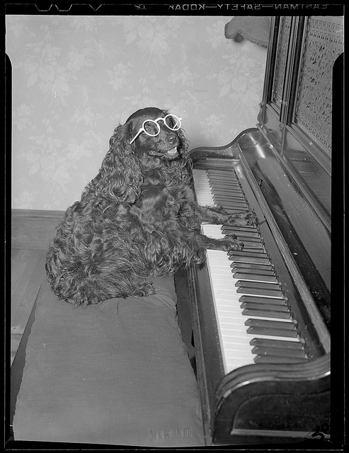 1934 - 1956: Dog playing the piano
