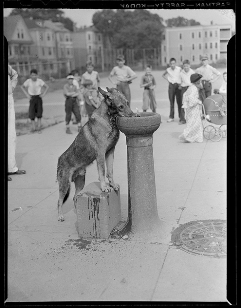 1934 - 1956: Dog drinking from water fountain