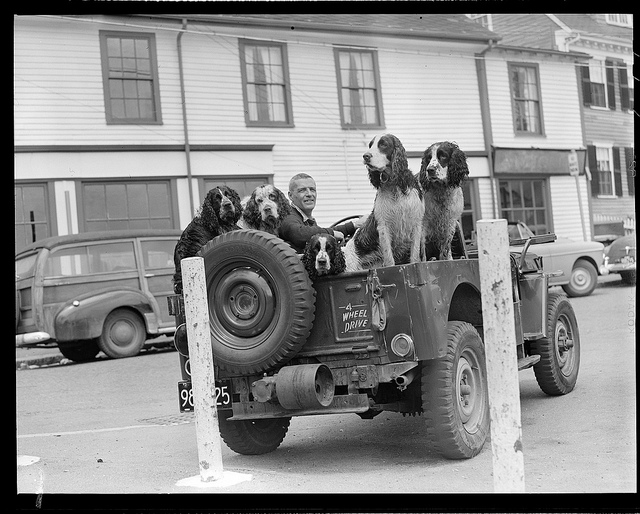 1934 - 1956: Dogs
