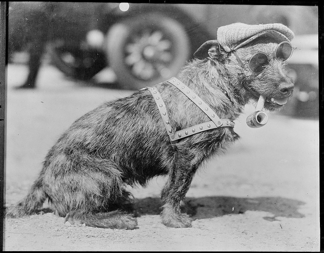 1917 - 1934: Burr MacDougall - Dog winner in L.A.