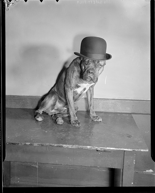 1939: Dog in bowler hat