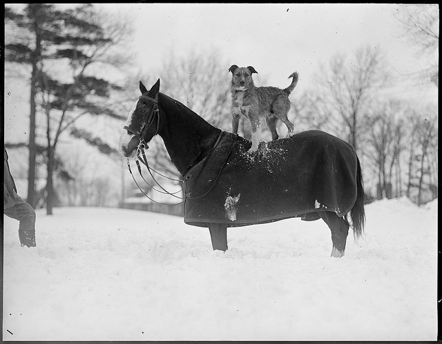 1917 - 1934: Horse & dog pals - winter time