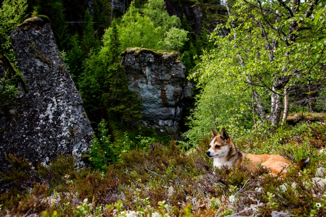 GГҐte and the Troll Boulders, Lundehund, 2013