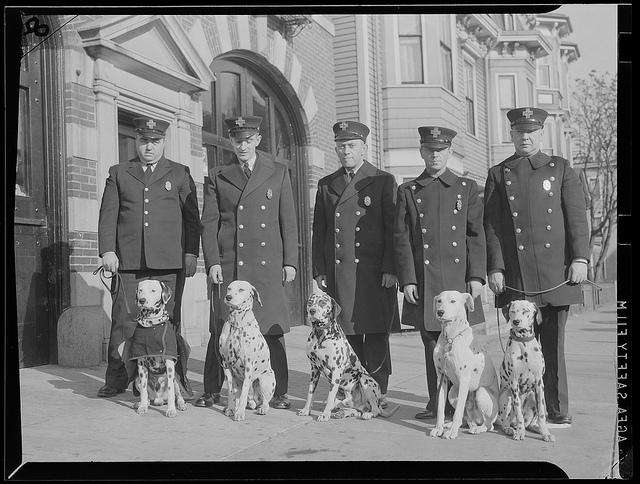1934 - 1956: Fire men and fire dogs