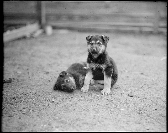 1917 - 1934: Puppies