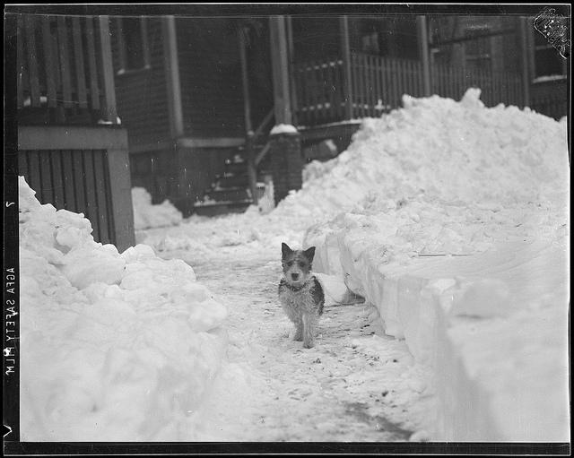 1940: Winter scenes