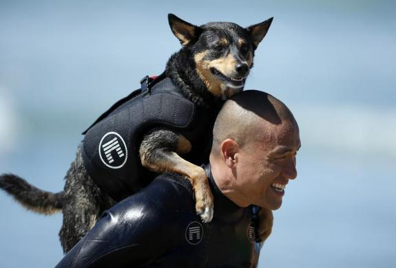 A man carries his dog on his back during the Surf City surf dog competition in Huntington Beach, California, September 29, 2013. REUTERS/Lucy Nicholson