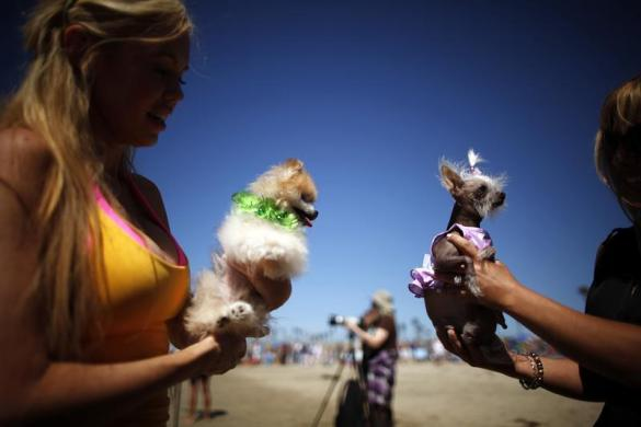 Women hold their dogs at the beach during the Surf City surf dog competition in Huntington Beach, California, September 29, 2013. REUTERS/Lucy Nicholson