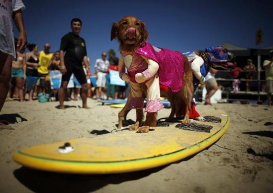 Dogs in costume wait to compete in the Surf City surf dog competition in Huntington Beach, California, September 29, 2013. REUTERS/Lucy Nicholson