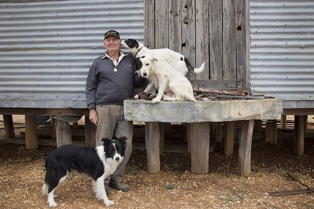 David Hines and Collies. Photo by Andrew Chapman