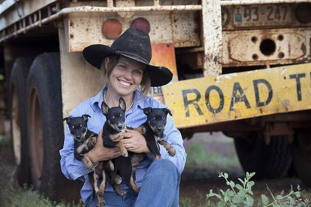 Estelle Taylor takes her kelpies all around the Northern Territory with her partner Scott Roughley as they contract muster together. The pups are the newest rectuits, Delamere Station. Photo by Melanie Faith Dove