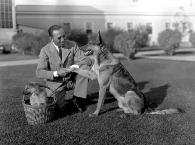 Peter the Great, the animal star who is said to have near human intelligence, presenting film director Chester Franklin with a new puppy, c. 1935 (Photo by General Photographic Agency/Getty Images)
