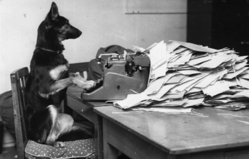 Petra, the Alsatian dog from the B.B.C's children's programme, 'Blue Peter' answering her fan mail, 1964 (Photo by John Pratt/Getty Images)