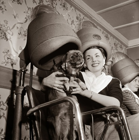 1955: Owner and dog settle in for a cut and blow-dry at a salon. (Getty Images)