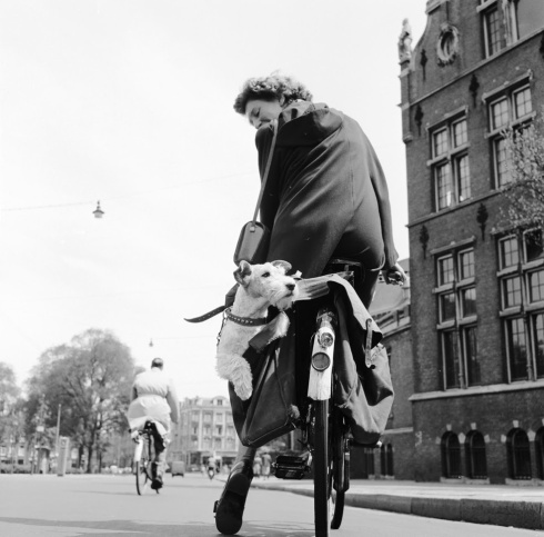 1954: A cyclist in Holland checks on her travel companion. (Getty Images)