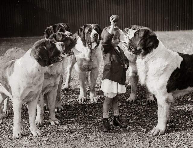 1935: Evelyn Luff entices her entourage of St. Bernard dogs at Abbots Pass kennels in England. (Getty Images)