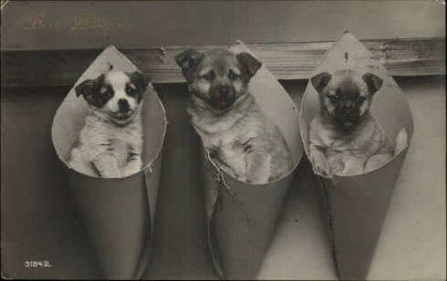 Adorable Shepherd Type Puppy Dogs in Cones, c 1910