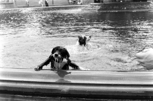 Dogs in Fountain. Central Park, New York City. Summer, 1961. Photo by Leonard McCombe