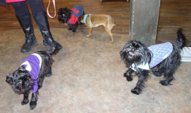 Falkor, Sumi, Brooklyn and Zola aka the cute crew!