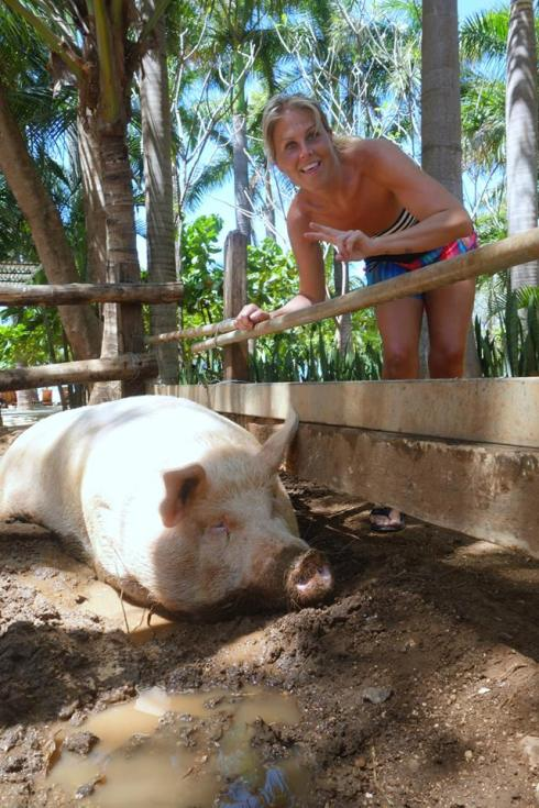 Hanging out with Lola, the  1000 pound pig, at Lola's Beach Bar.