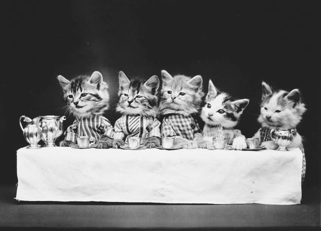 A hungry bunch. (Harry Whittier Frees/Library of Congress)