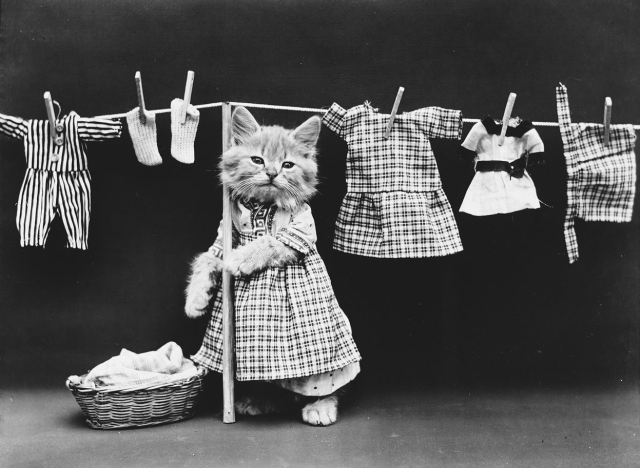 Hanging up the wash. (Harry Whittier Frees/Library of Congress)