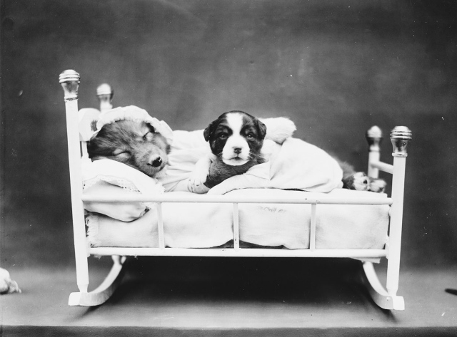 When bedtime comes. (Harry Whittier Frees/Library of Congress)