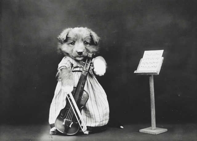 The fiddler. (Harry Whittier Frees/Library of Congress)