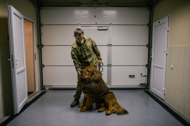 Nikolai Garus, 34, holding Ken, a Tibetan Mastiff, one of the rarest and most expensive breeds in the world