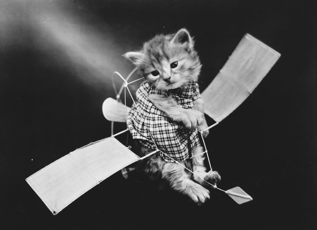 The Aviator. (Harry Whittier Frees/Library of Congress)