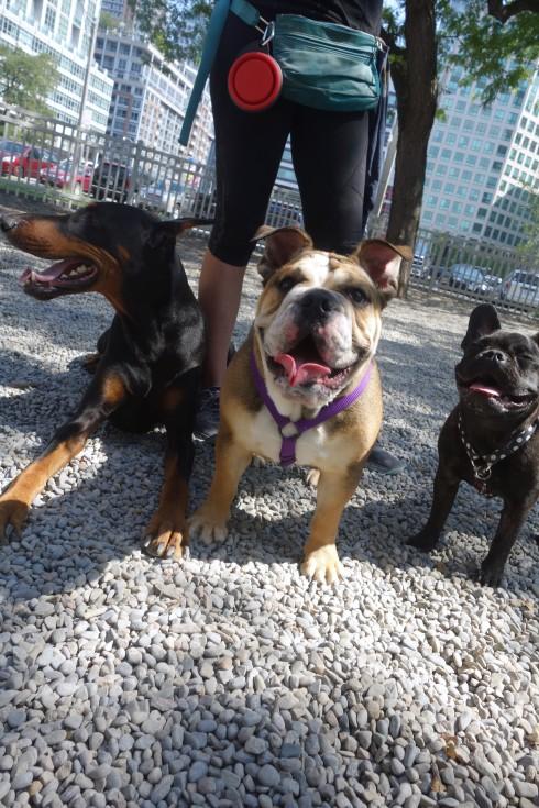 Logan, Lucy, & Ruby - 3 amigos!