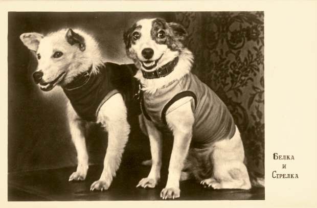 This photograph of Belka and Strelka was taken at the dogs' first press conference in 1960 and printed onto a postcard.