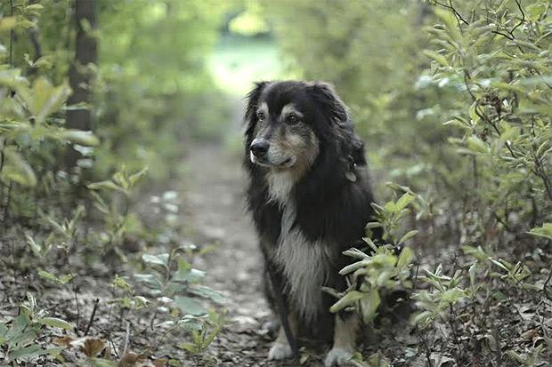 Gus Van Sant's dog Milo © Miles Rasmussen