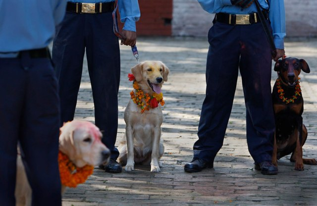 Nepalese policemen with their dogs participate during the Tihar festival at a police kennel division in Katmandu, Nepal, Saturday, October 17, 2009. (Photo by Gemunu Amarasinghe/AP Photo)