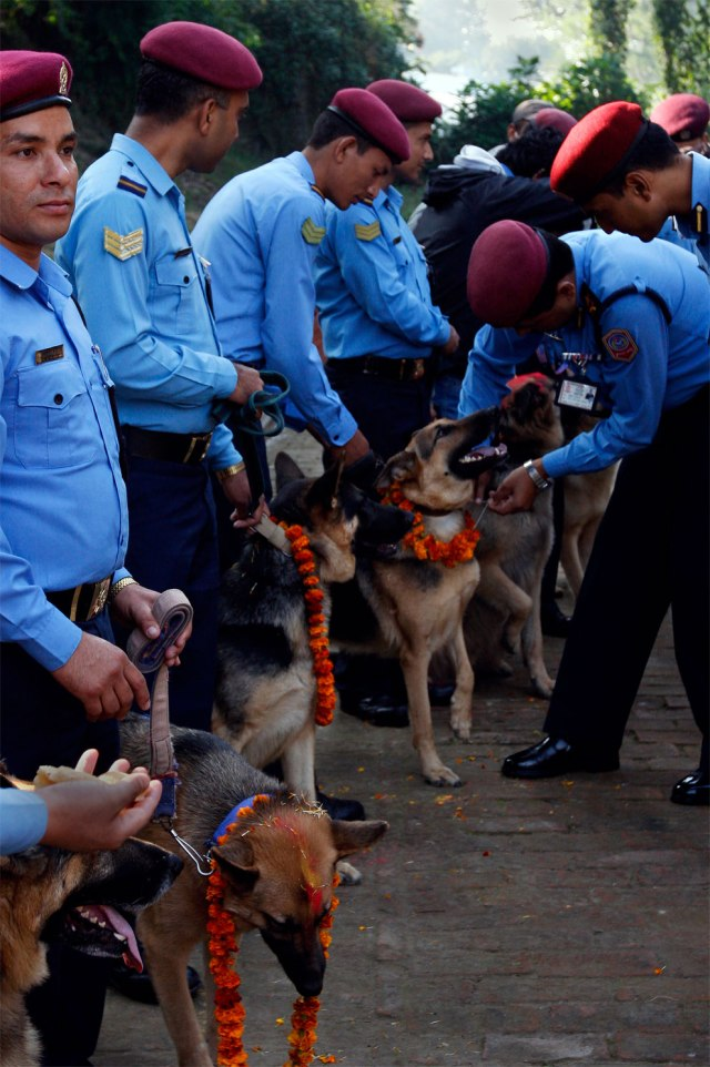 Nepalese policemen garland and apply vermillion on the foreheads of their dogs during the Tihar festival at a police kennel division in Katmandu, Nepal, Saturday, October 17, 2009. (Photo by Gemunu Amarasinghe/AP Photo)