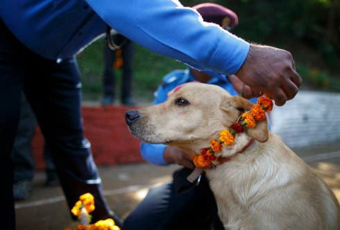 A police officer puts a garland on a police dog during the dog festival as part of celebrations of Tihar at Nepal Police Academy in Kathmandu October 22, 2014. (Photo by Navesh Chitrakar/Reuters)