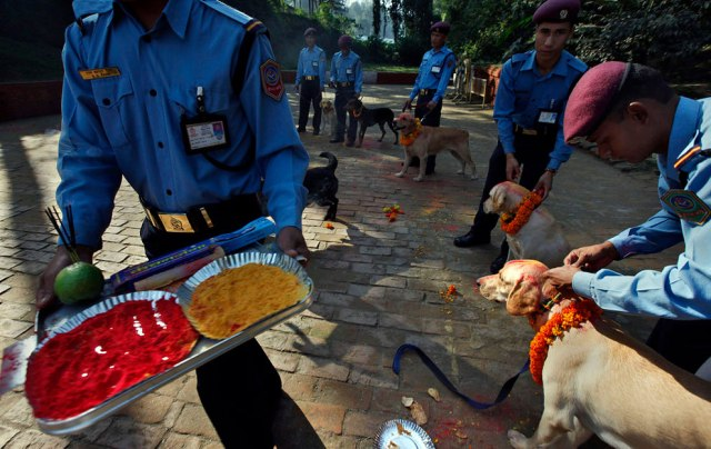 Nepalese policemen garland and apply vermillion on the foreheads of their dogs during the Tihar festival at a police kennel division in Katmandu, Nepal, Saturday, October 17, 2009. Nepalese are marking the five-day long festival of Tihar, and celebrations today were dedicated to the worship of dogs. (Photo by Gemunu Amarasinghe/AP Photo)