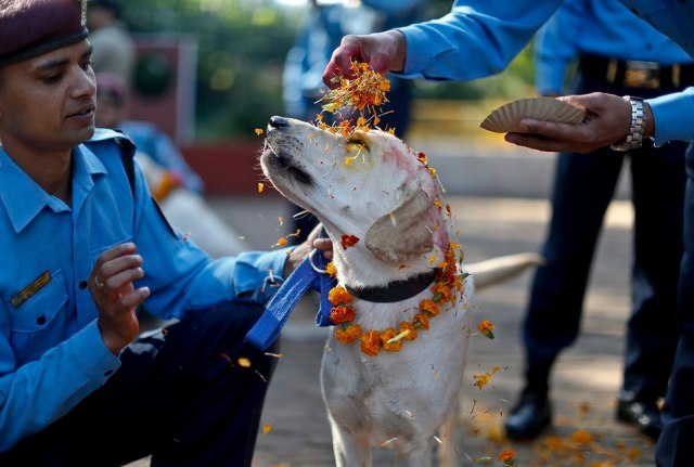 A police officer sprinkles colored powder onto a police dog at Nepal's Central Police Dog Training School as part of the Diwali festival, also known as Tihar Festival, in Kathmandu, Nepal, 22 October 2014. The Tihar festival is the second major festival for Nepalese Hindus and this year is held from 21 October 2014. (Photo by Narendra Shrestha/EPA)