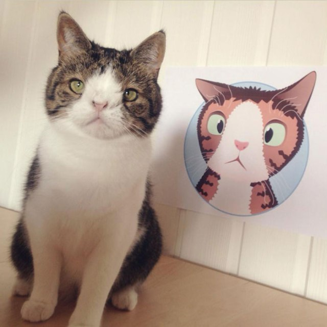"""""""Monty shared a room with some of the other cats from the animal shelter [that] acted a little aggressive, [but] Monty [remained] uneager to pick a fight."""""""